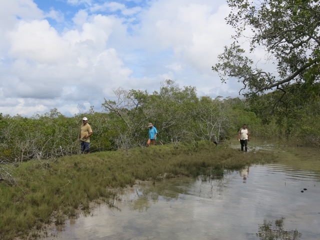 Exploring salt marsh_CtyC2015